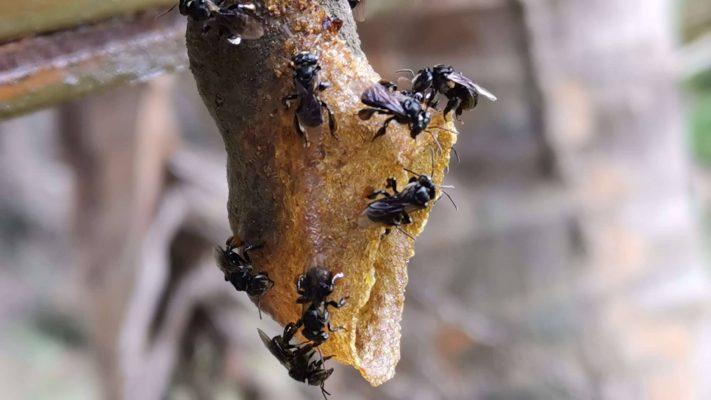 buy organic raw honey