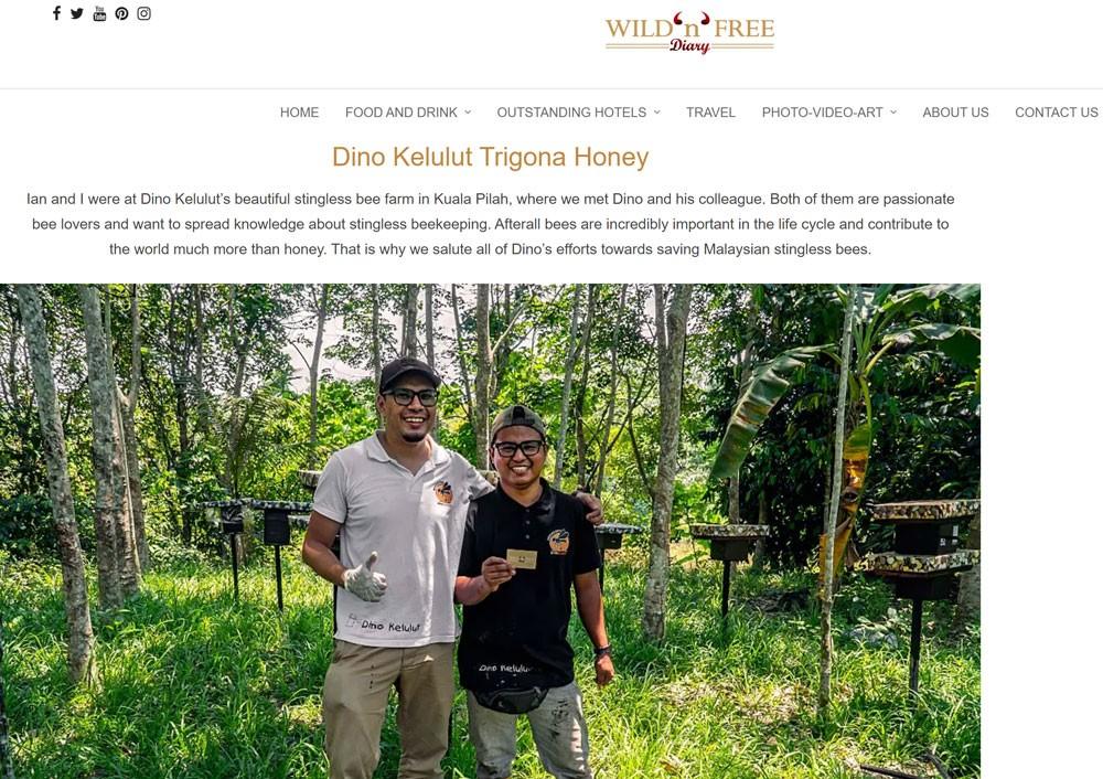 dinokelulut - trigona honey wild and free